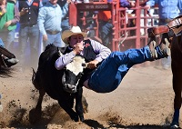 East Mississippi Community College men's Rodeo Team member Myles Neighbors wrestles a steer during a National Intercollegiate Rodeo Association Ozark Region competition.